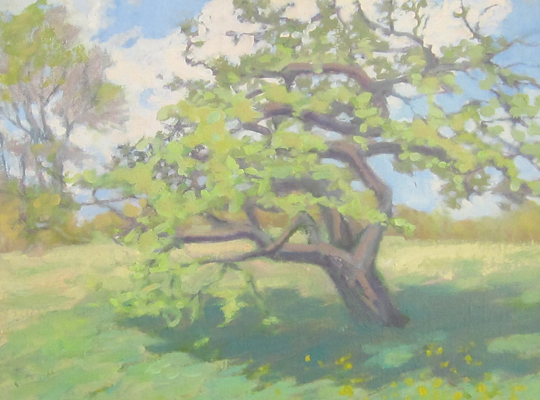 "Old Apple Tree, 16"" x 20"", oil on canvas panel"